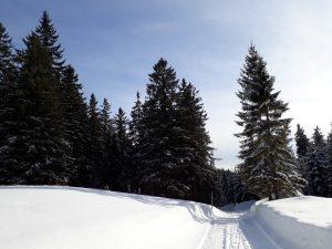 Winterwandern in Puchenstuben