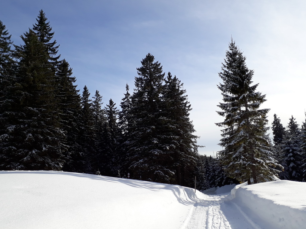 Winterwanderung und Langlaufen in Puchenstuben