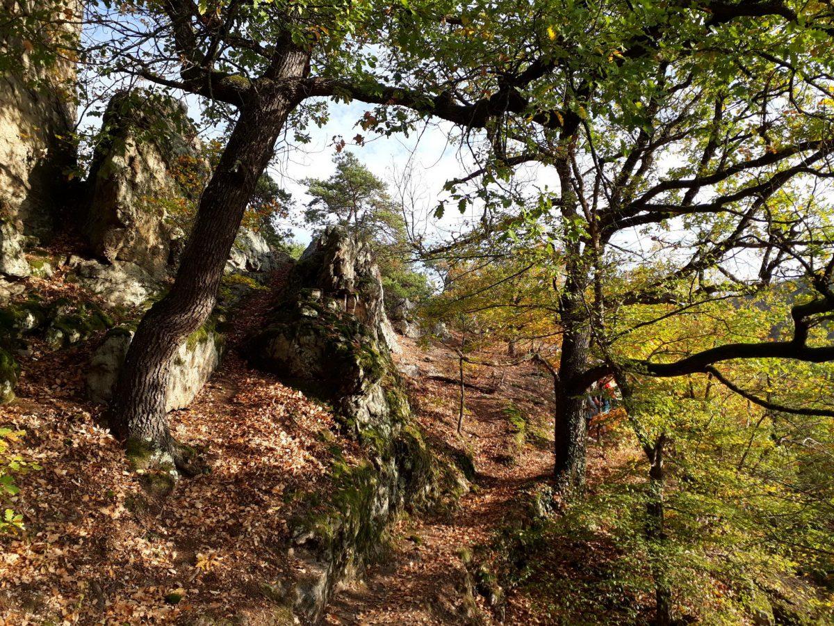 Herbst-Wanderung in der Wachau